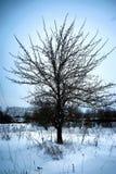 Árbol solo rústico del campo del invierno Imagen de archivo