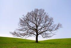 Árbol solo sin las hojas Imágenes de archivo libres de regalías