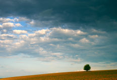 Árbol solo y cielo nublado Fotos de archivo libres de regalías