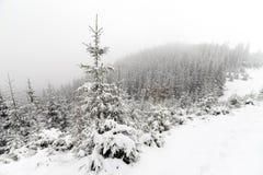 Árbol Spruce Forest Covered de niebla por la nieve en paisaje del invierno Foto de archivo libre de regalías