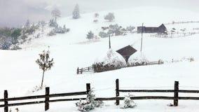 Árbol Spruce Forest Covered de niebla por la nieve en paisaje del invierno almacen de video