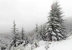 Árbol Spruce Forest Covered de niebla por la nieve en paisaje del invierno imagen de archivo