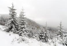 Árbol Spruce Forest Covered de niebla por la nieve en paisaje del invierno Imagenes de archivo
