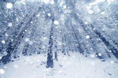 Árbol Spruce Forest Covered de niebla por la nieve en paisaje del invierno imágenes de archivo libres de regalías