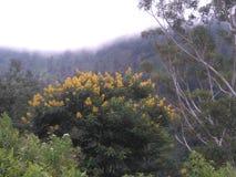 árbol Sri Lanka de la flor Foto de archivo libre de regalías