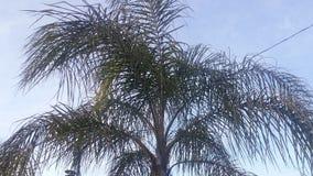 Árbol suave Fotografía de archivo