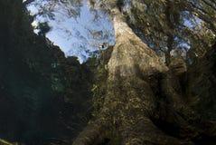 Árbol subacuático arriba Imagen de archivo libre de regalías