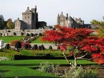Árbol Sunlit y castillo escocés Fotos de archivo libres de regalías