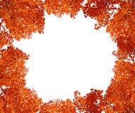 Árbol superior en otoño. Fotos de archivo libres de regalías