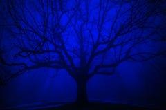 Árbol surrealista en niebla del azul del invierno