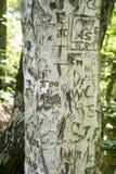 Árbol tallado en Virginia Fotografía de archivo libre de regalías