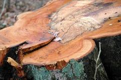 Árbol-tocón Imagenes de archivo
