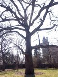 Árbol todopoderoso delante del sol y del castillo Foto de archivo libre de regalías