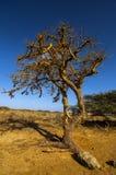 Árbol torcido Fotografía de archivo