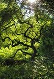 Árbol torcido Foto de archivo libre de regalías