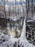 Árbol tragado a través de la cala en el bosque del invierno, nieve fresca fotografía de archivo libre de regalías