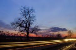 Árbol travieso Fotografía de archivo