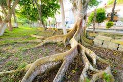 Árbol tropical Fotos de archivo