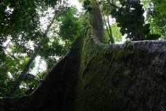 Árbol tropical Fotografía de archivo
