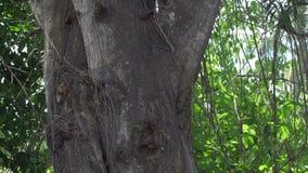Árbol tropical de la selva en Asia sudoriental (Tailandia) - 4k almacen de video