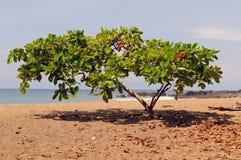 Árbol tropical de la sombra en una Costa del Pacífico imagenes de archivo