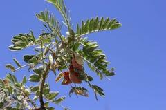 Árbol tropical en azul Fotos de archivo libres de regalías