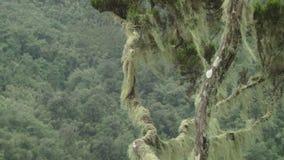 Árbol tropical en Kenia almacen de metraje de vídeo