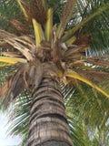 Árbol tropical en la isla de Kurumba, Fotos de archivo libres de regalías