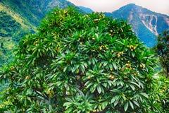 Árbol tropical verde Fotos de archivo libres de regalías