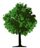 Árbol (vector) Imagen de archivo libre de regalías