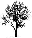 Árbol (vector) Fotos de archivo libres de regalías