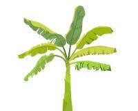 Árbol-vector del plátano libre illustration