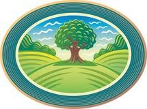 Árbol verde Foto de archivo
