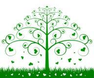 Árbol verde Fotos de archivo