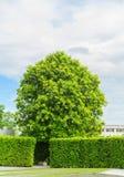 Árbol verde Imagen de archivo libre de regalías