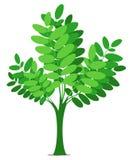 Árbol verde ilustración del vector