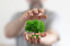 Árbol verde fotografía de archivo