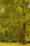 Árbol verde imagen de archivo