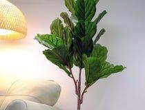 Árbol verde artificial de los ficus, detalle del interior imagen de archivo