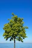 Árbol verde, cielo azul, agua Imagenes de archivo