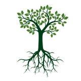 Árbol verde con las hojas y las raíces ilustración del vector