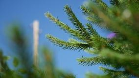 Árbol verde de la picea del abeto cubierto por la nieve en día de invierno frío almacen de metraje de vídeo