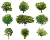 árbol verde de las colecciones aislado árbol verde aislado en los vagos blancos Fotografía de archivo libre de regalías