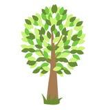 Árbol verde del vector con la hierba Foto de archivo libre de regalías