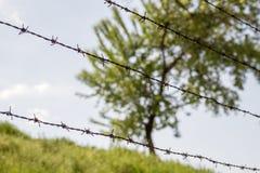 Árbol verde detrás del alambre de púas foto de archivo libre de regalías