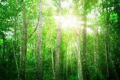 Árbol verde en el bosque Imagenes de archivo