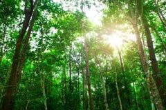 Árbol verde en el bosque Fotos de archivo