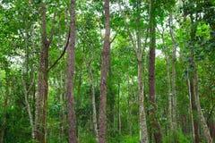 Árbol verde en el bosque Foto de archivo libre de regalías