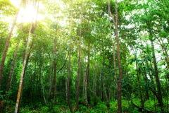 Árbol verde en el bosque Imagen de archivo libre de regalías