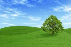 Árbol verde en el campo Imágenes de archivo libres de regalías